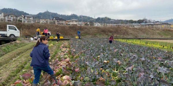 20200215ブロッコリー収穫イベント_201129